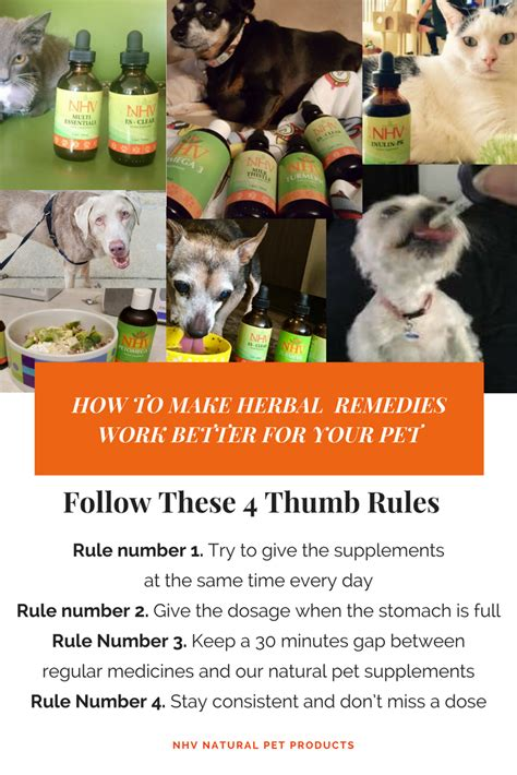 Dog Diabetes And Cat Diabetes Find Balance In Natural Herbal.