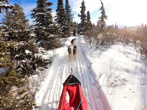 Dog Sledding In Yukon – The Ultimate Canadian Winter Adventure.
