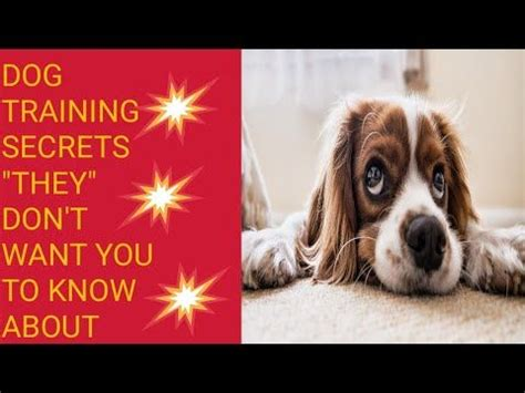 @ Dog Training Secrets They Don T Want You To Know About .
