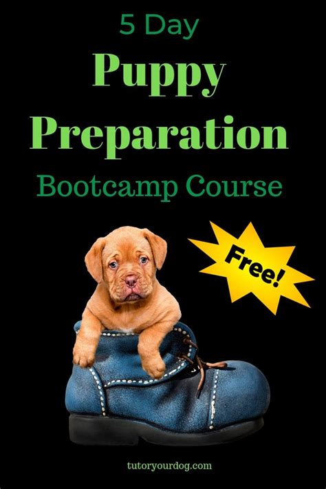 [click]dog Training Tutor   Clixlr8 Online.