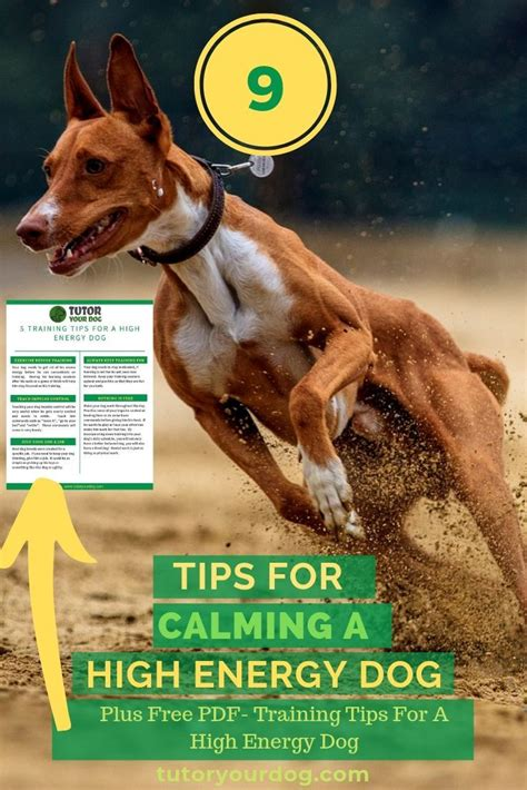 @ Dog Training Tutor   Clixlr8 Online.