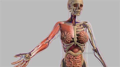 @ Download   Animated Anatomy.