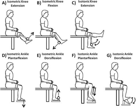[pdf] Effect Of Isotonic And Isometric Knee Extension Exercises .