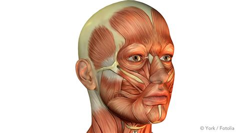Exercises To Stop Snoring – What Really Works? - Somnishop.