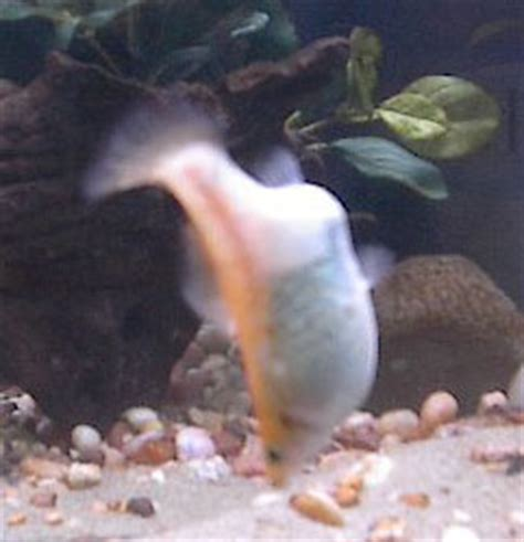 Faqs On The Molly Behavior - Wetwebmedia.
