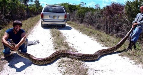 Florida Everglades Python Problem