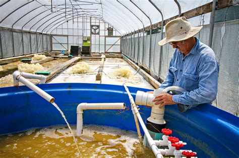@ Freshwater Shrimp Farming  Shrimp Farming And Aquaculture .