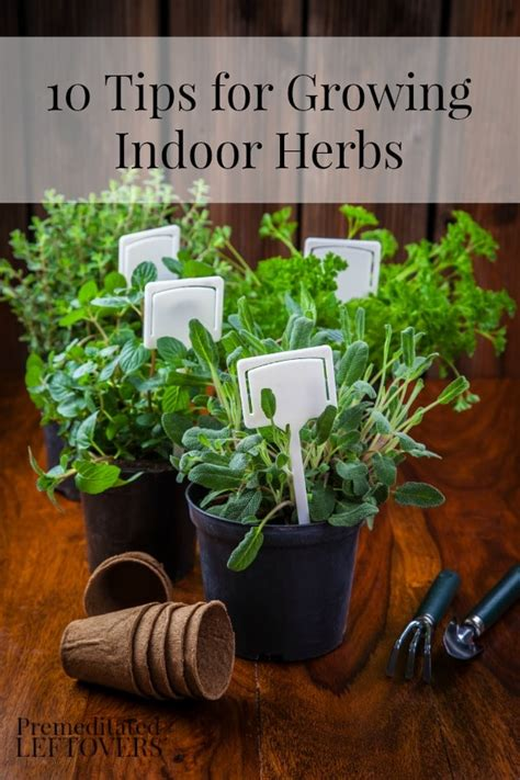 [pdf] Grow Your Own Herb Garden Phrase Join.