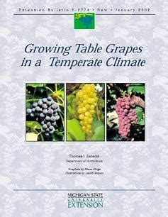 Growing Table Grapes In A Temperate Climate - Msu Extension.