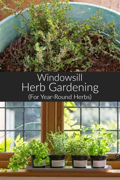 @ Growing Your Own Windowsill Herb Garden For Year Round .