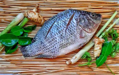 [pdf] How-To Guide Tilapia Farming.