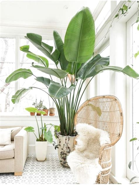 House Plants For Sale Online