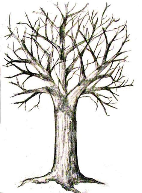 How To Draw A Tree - - Happy Family Art.