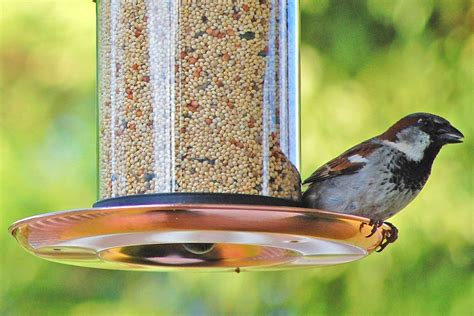 How To Get Birds To Come To Feeder