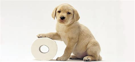 @ How To Housetrain Potty Train Any Dog Reviews-Know What S Good And Bad.