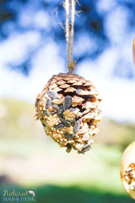 How To Make Bird Feeders Out Of Pine Cones