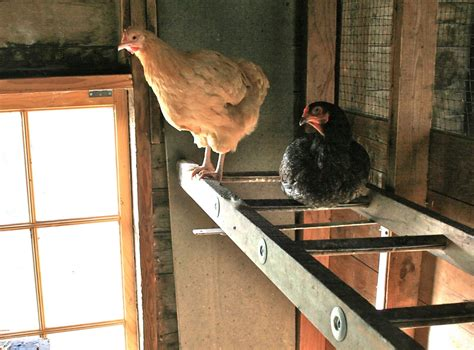 How To Make Chicken Coop Perches