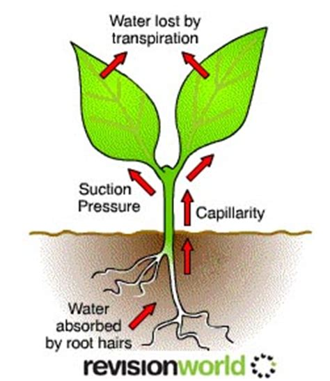 How Can Reduce The Transpiration Losses Of Water Through Leaves?.