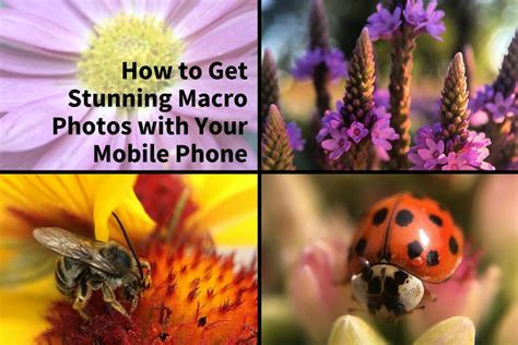 How To Get Stunning Macro Photos With Your Mobile Phone.