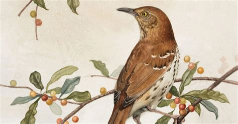 How To Go From Watching Birds To Drawing Them Audubon.