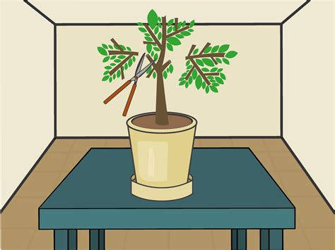 @ How To Grow Lemon Trees Indoors With Pictures - Wikihow.
