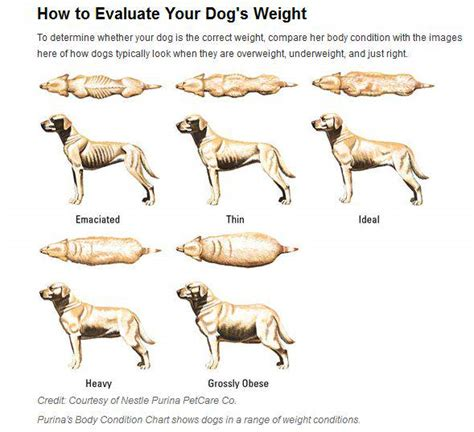 @ How To Help Your Overweight Dog Lose Weight.