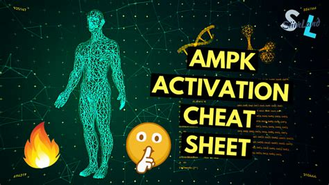 How To Increase Ampk For Fat Burning And Longevity - Siim Land.