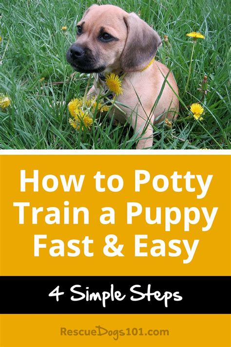 [click]how To Potty Train A Dog  Potty Training Your Dog Guide.