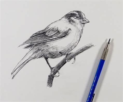 How To Sketch A Bird - 30 Minute Drawing Exercise.
