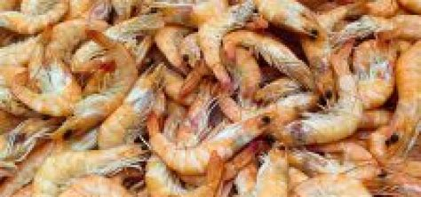 @ How To Start Shrimp Farming Business - Stepwise Plan Guide.