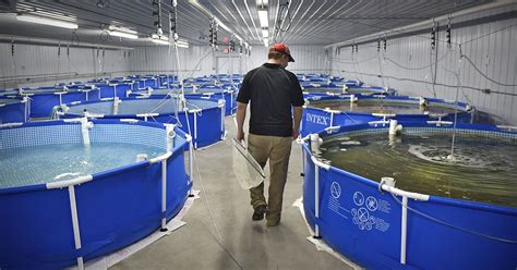 @ Indoor Freshwater Shrimp Farming Business Guide  Start A .