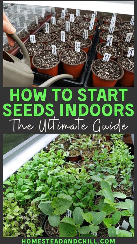 [pdf] Indoor Seed Starting 101 - Home - Carton 2 Garden.