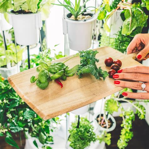 Indoor Growing Equipment