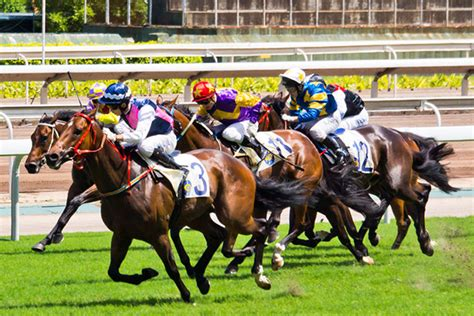 Investor Pulls Horses From Qld Racing - 4bc.