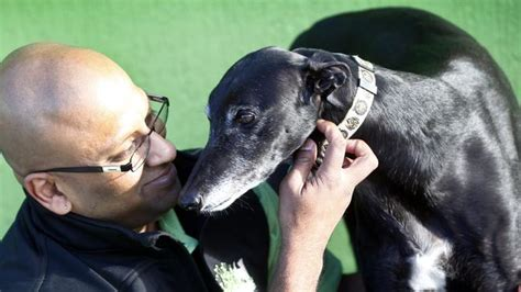 [pdf] Joint Select Committee On Greyhound Racing In Tasmania.
