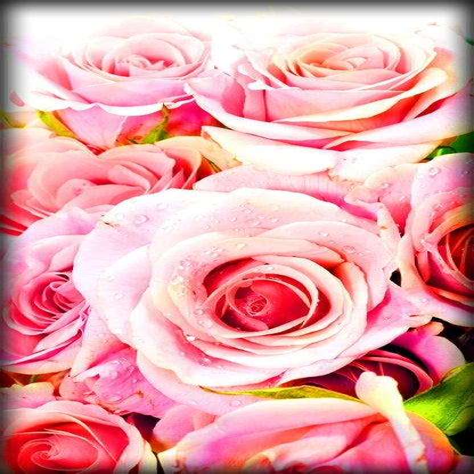 Live Roses