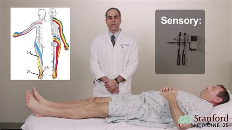 Low Back Exam, Approach To Stanford Medicine 25 Stanford.