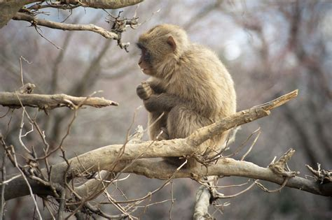 Monkey Photography