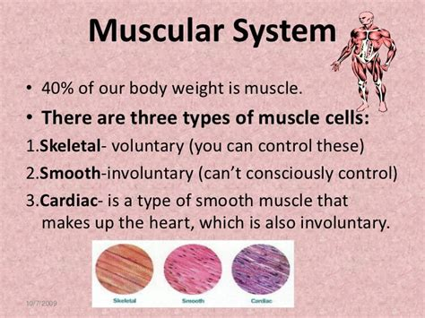 Muscular System: Facts, Functions & Diseases - Live Science.