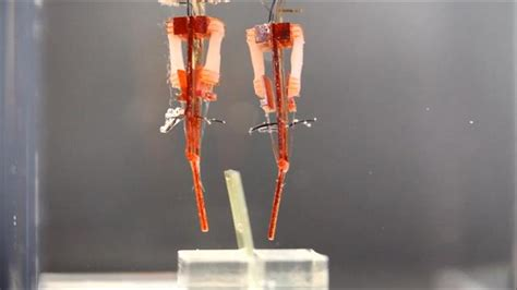 New Hybrid Robot Uses Living Muscle Tissue To Move - Latest Stories.