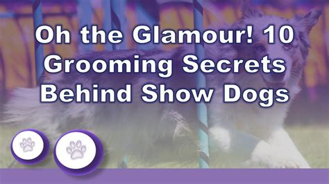 Oh The Glamour! 10 Grooming Secrets Behind Akc Show Dogs.