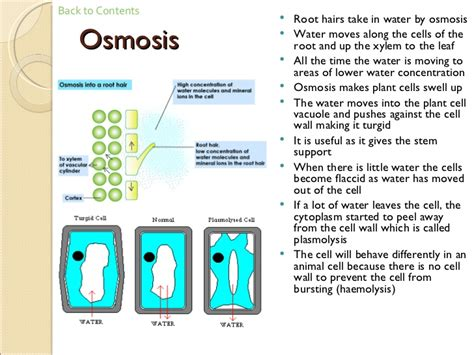 Osmosis And Plant Transport (ccea) - Revision 4 - Gcse Biology.