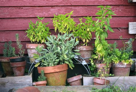 [pdf] Planting Your First Herb Garden.