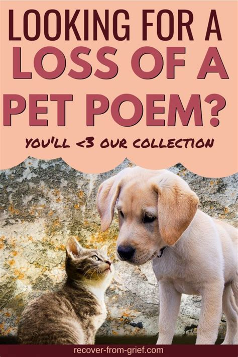 [click]recover From The Grief Of Pet Loss.