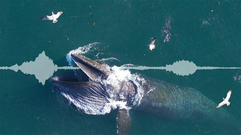 [pdf] Research Scientists Reveal Secrets Of Whales U - Whoi Edu.