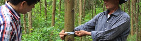 [pdf] Responsible Wood Sourcing In Vietnam.