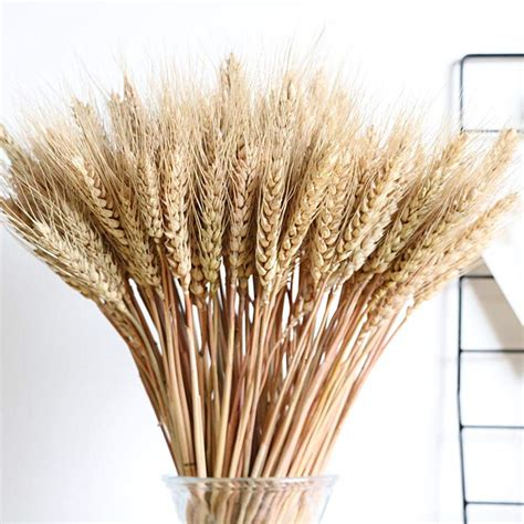 Reviews  Dried Wheat Dried Flowers Home Decor Dried .