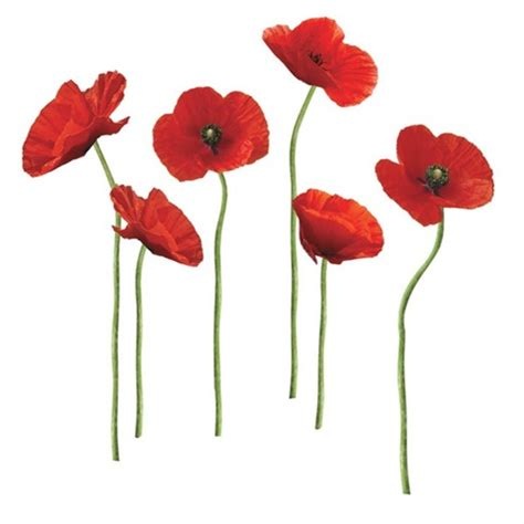 Roommates Rmk1729gm Poppies At Play Peel And Stick Giant .