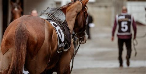 [pdf] Stratford Cup Racemeeting - Loveracing Nz.