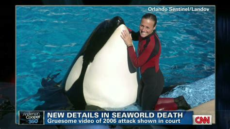 Seaworld Trainers: Working With Killer Whales Is A Calculated Risk.